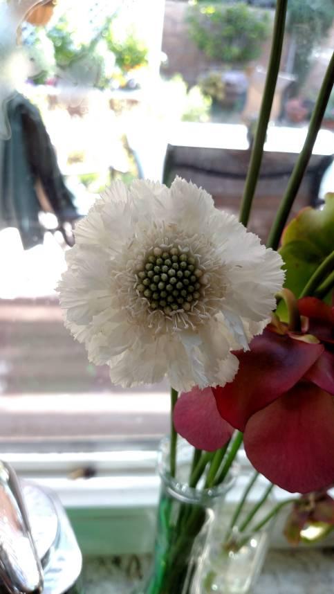 Flower 3_27