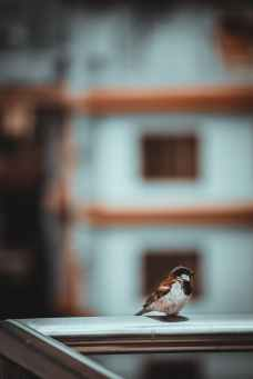 photo of bird on metal railing
