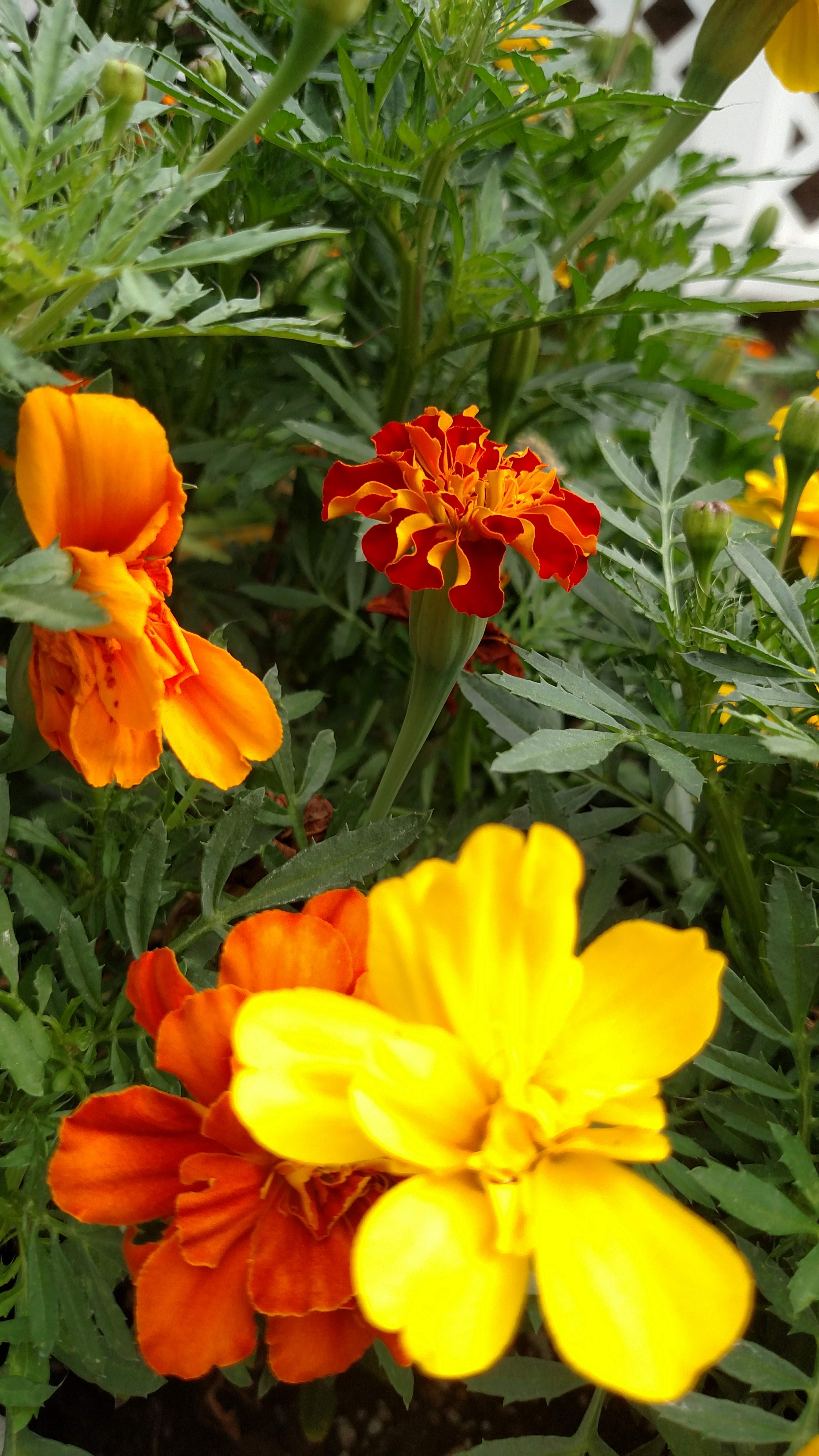 Garden 10_10 Autumn