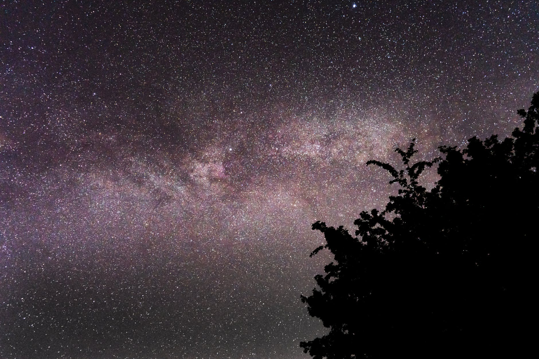 silhouette of tree under starry night sky