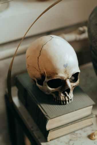 white skull on white wooden table